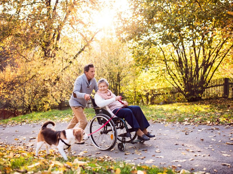 Senior man and elderly woman in wheelchair in autumn nature. Man with his mother on a walk with a dog.